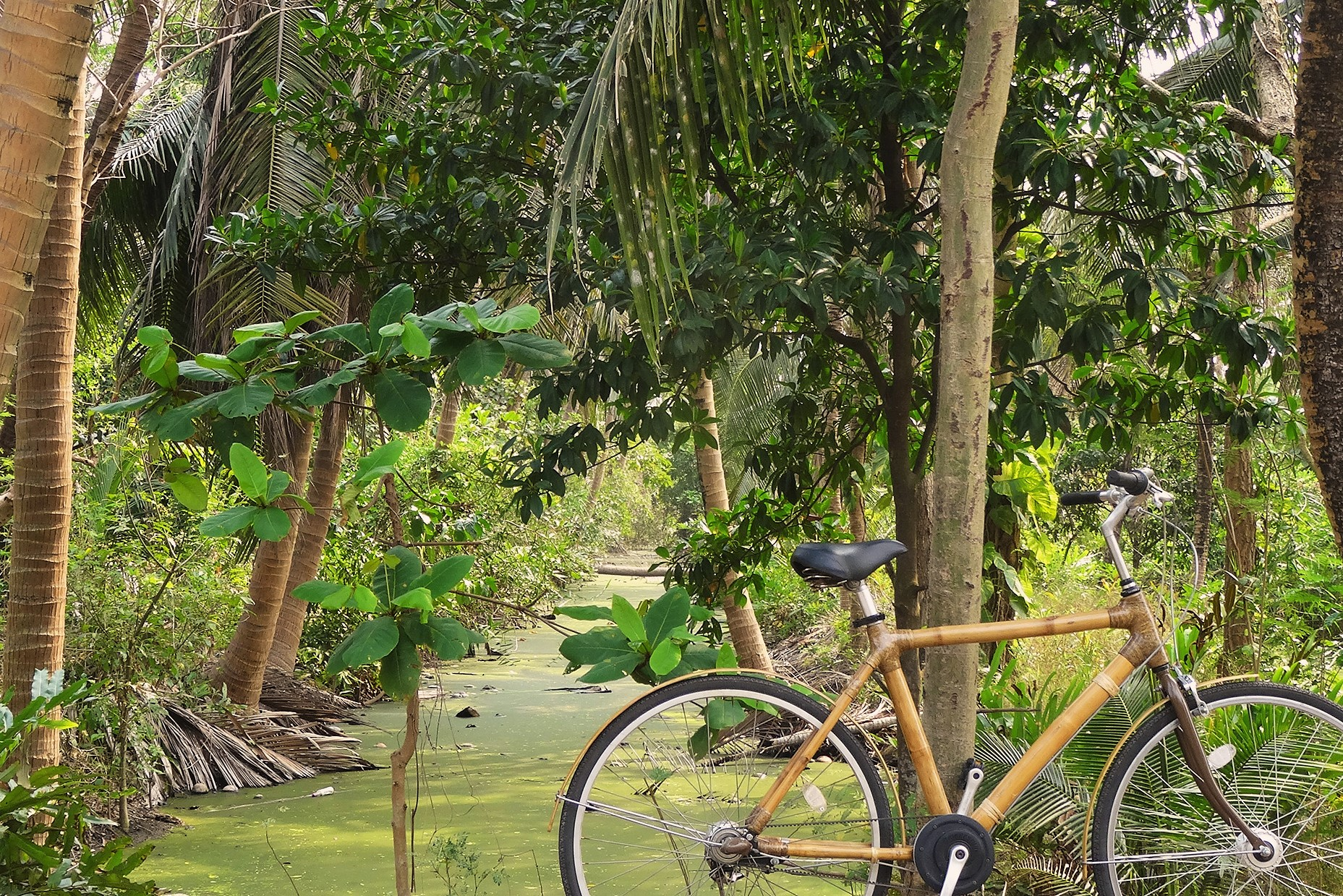 Nature bamboo bicycle tour