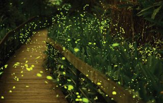 Fireflies light up at night in Bangkok